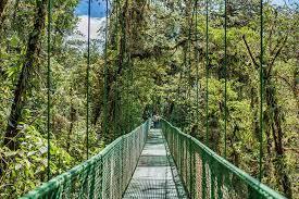 Puentes colgantes Selvatura